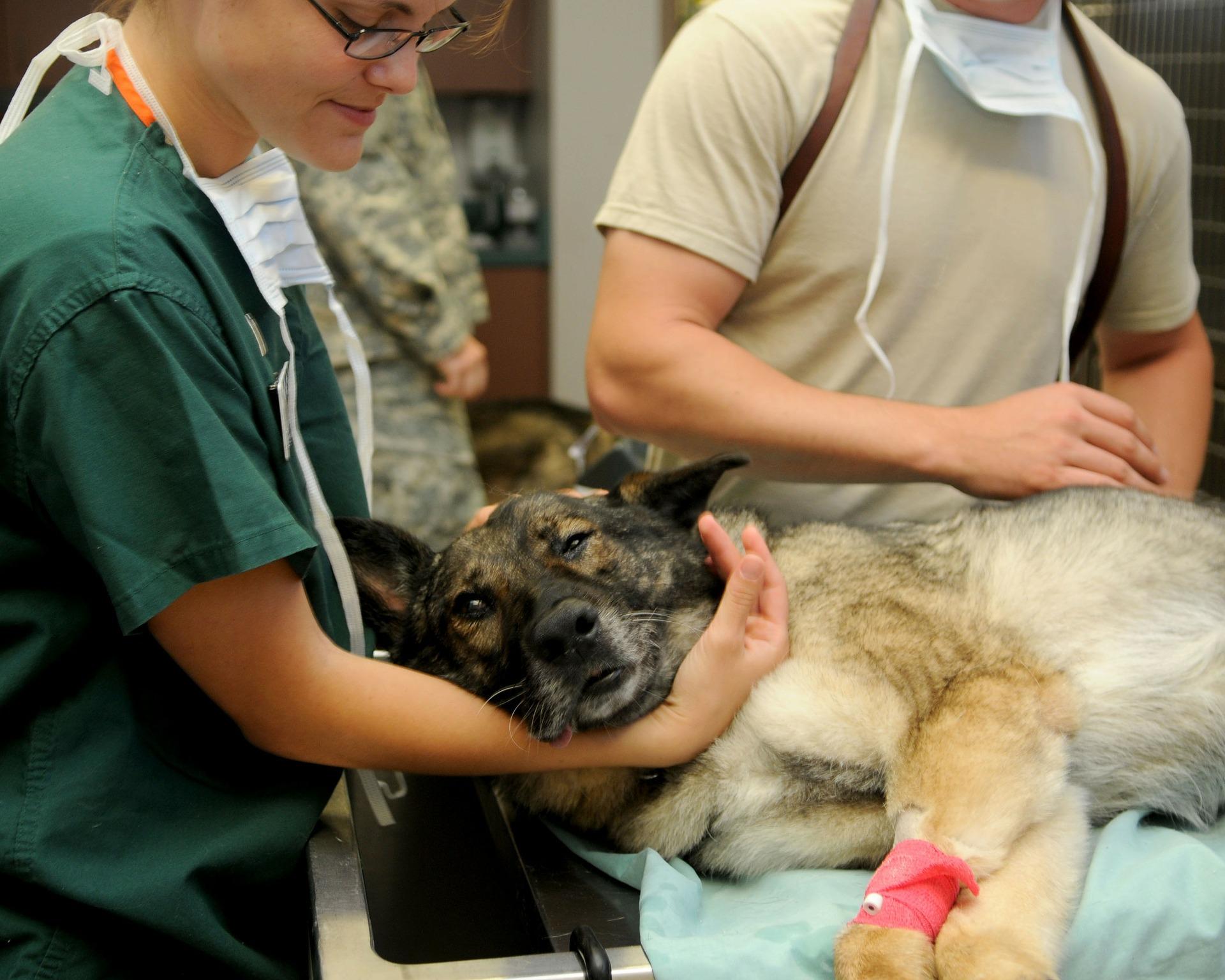 Ha műtétre kerül sor - Állatorvosi Rendelő Pécs